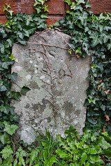 In memoriam (Ruth Flickr) Tags: 1850 england europe faction gloucestershire tewkesbury dead gravestone ivy town