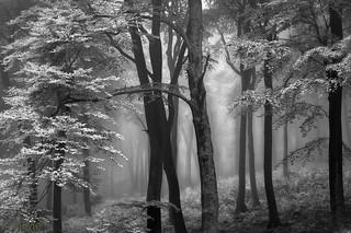 Nebel im Pfälzerwald
