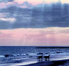Cuando veo de nuevo el mar  el mar me ha visto o no me ha visto? -Neruda (Lewitus) Tags: ellibrodelaspreguntas neruda ocean israel dogssunset waves hasselblad500c scannedslide