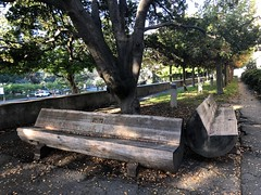 Benches for Monday (Melinda Stuart) Tags: campus bench hbm monday uc mulford forestry trunk shade rest two berkeley