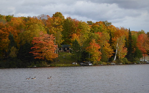 Fall colors with geese