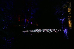 2018 - 4.10.18 Enchanted Forest (38) (marie137) Tags: forest lights trees show marie137 bright colourful pitlochry treeman attraction visit entertainment music outdoors sculptures wicker food drink family people water animation