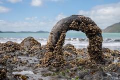 Mooring Ring at Wonga Wonga Bay (aucklife) Tags: bay beach westauckland whatipu whatipubeach wongawongabay