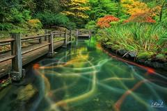 Electric Slide (Aaron Reed Photography) Tags: naturephotography workshop business aaronreedphotography aaronreedlimitededition aaronreedfineart portlandjapanesegarden longexposure koi garden japanese