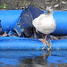 Rubber Ducky Ducky Ducky (2)