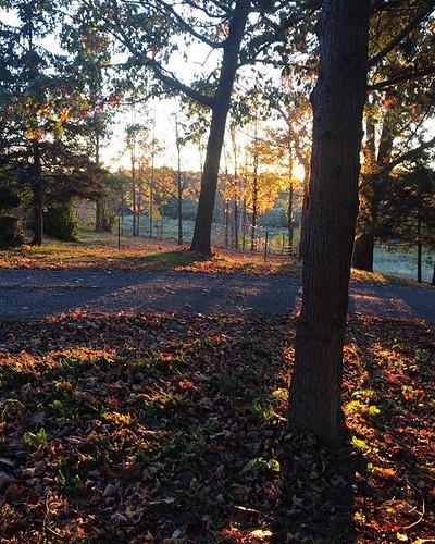 Goldenhour #goldenlight #trees #October #sundown #amityfarmbatik
