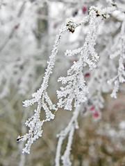39188617 (aniaerm) Tags: snow ice frost