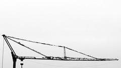 clear for takeoff (m_laRs_k) Tags: birds olympus omd crane
