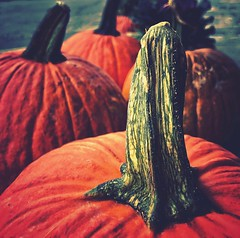 PUMPKINS (BMZYGrace) Tags: pumpkins autumn orange vegetables halloween stem carbondalepa lackawannacopa