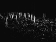 Myschievia (Zack Huggins) Tags: olympustoughtg5 vscofilm pack06 hughesspringstx myschievia regionalburn woods forest trees headlights spooky spoopy haunted eerie availablelight lowlight highiso handheld pointandshoot compact digitalcompact advancedcompact waterproofcamera waterproofcompact trunks light shadow swathoflight path lost