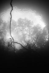 NorthWales-201810-VivianQuarry-16-TreeLine (Tony J Gilbert) Tags: snowdonia llanberis northwales viviandivecentre vivianquarry mountsnowdon diving aquatic freshwater quarry floodedquarry nikon d300