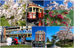 Postcard from Christchurch (Jocey K) Tags: collage trams postcard postcardfromchristchurch cherryblossom halswellquarry people architecture trees cbd spring newzealand christchurch