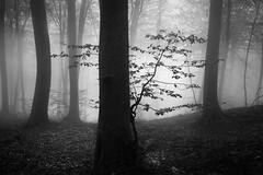 New life II (ilias varelas) Tags: fog forest field blackandwhite bw nature mood light mono monochrome mist landscape land atmosphere varelas greece trees