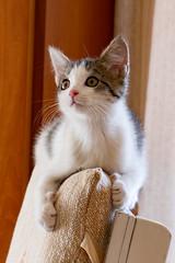 Asya (Lory63419) Tags: colors cat cute photos portrait