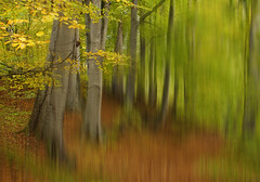 autumn (renatecamin) Tags: abstract tree forest autumn herbst