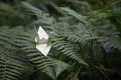 Paper Crane and Fern (Eridanus 21) Tags: paper crane fernツルとシダ fern origami おりがみ 折り鶴 ツル 折り紙 ヤブラン origamiphoto 花 flower 花写真シダ papercrane 花写真 flowerphoto 花が好き