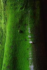Green so green (zuka_666) Tags: mexico city coyoacan colors textures nikkon nikon