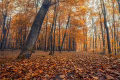 Autumn Walk (michel1276) Tags: autumn herbst tree trees baum bäume wald forest woods batis1828 batis2818 sonya7iii sony
