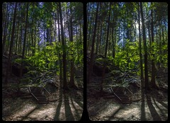 Trail to Hohnstein 3-D / CrossEye / Stereoscopy / HDRaw (Stereotron) Tags: saxony sachsen saxonswitzerland sandstone mountains nationalpark sächsischeschweiz landschaft landscape trail pfad path trekking wandern wanderweg outdoor forest woods outback backcountry wilderness autumn fall herbst europe germany deutschland cross eye view xview crosseye pair free sidebyside sbs kreuzblick bildpaar 3d photo image stereo spatial stereophoto stereophotography stereoscopic stereoscopy stereotron threedimensional stereoview stereophotomaker photography picture raumbild twin canon eos 550d remote control synchron kitlens 1855mm 100v10f tonemapping hdr hdri raw