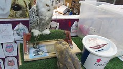 Guinevere and Anna (billnbenj) Tags: barrow cumbria video owl barnowl raptor birdofprey