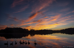 Geese Sunset (scottnj) Tags: 365the2018edition 3652018 day271365 28sep18 lakehorizon lakehurst nj oceancounty newjersey clouds reflection lake water trees sunset colorful goose geese landscape waterscape nature fowl birds reflections