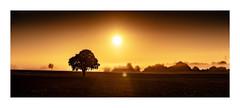Morning has broken #landscape #suffolk #photography #sunrise #dawn #littleglemham #eastanglia #sun #goldenhour #tree #ethereal #nikon #simonthphotography (SimonTHGolfer) Tags: nikon landscape simonthphotography littleglemham tree dawn goldenhour suffolk ethereal sun photography sunrise eastanglia