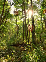 Forest Realm (The-Beauty-Of-Nature) Tags: autumn fall herbst cozy mine october nature photography original light licht sunny sonnig forest woods wald trees bäume kühkopf naturalresort