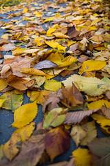Yellow leaves (Ewelina Jaminska) Tags: yellow autumn leaf leaves orange brown path fall nature natura natural warszawa warsaw poland varsovie varsovia polonia pologne beautiful beauty