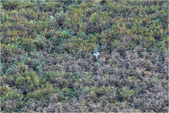 Margam Park - Spot the Stag (DHHphotos) Tags: margam park deer stag port talbot neath glamorgan wales