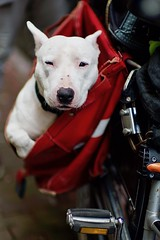 easy rider (claudia 222) Tags: dog bicycle amsterdam noctilux