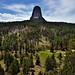 A Hillside of Ponderosa Pine (Devils Tower National Monument)
