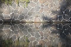 Mauerblümchen (Elbmaedchen) Tags: mauerblümchen eilbekkanal spiegelung wasserspiegelung ufer water reflektion reflection alster seitenarm