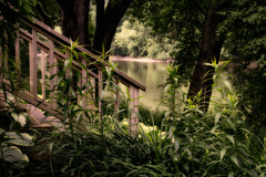 Susquehanna stairway (FotoFloridian) Tags: nature river tree water forest outdoors landscape scenics stream greencolor tranquilscene woodland beautyinnature old plant newyork owego susquehanna sony alpha a6000 stairs