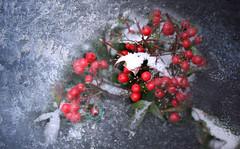 Occasionally winter Frost (Sueyane) Tags: winter frost bokeh berries garden gardenplant thought nature dof macro freeze
