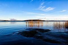 November sea & sky (Joni Mansikka) Tags: autumn nature outdoor sea sky blues clouds trees reeds silhouette rocky landscape balticsea harvaluoto piikkiö suomi finland