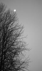 6Q3A0891 (www.ilkkajukarainen.fi) Tags: blackandwhite mustavalkoinen monochrome puu three moon espoo visit travel travelling happy life kuu finnoo suomi finlande finland eu europa scandinavia