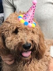 Clover 1st birthday