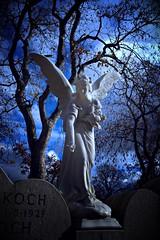 Rosen streuender Götterbote (Maquarius) Tags: friedhof hauptfriedhof engel statue grab mond rosen nacht würzburg mainfranken unterfranken franken
