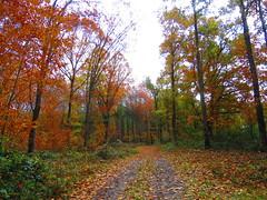 Bosque de la Ulzama (eitb.eus) Tags: eitbcom 30187 g1 tiemponaturaleza tiempon2018 otono nafarroa basaburua eduardorecaldeotoño2018