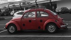 Beetle Spotting (blackthorne56) Tags: bird beatles beatle volkswagen beetle bug lady
