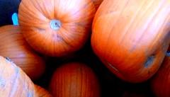 Future Jack O 'Lanterns? (Maenette1) Tags: pumpkins jackolanterns orange jacksfreshmarket menominee uppermichigan flicker365 allthingsmichigan absolutemichigan projectmichigan