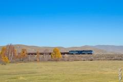 Yesterday... (N.Batkhurel) Tags: season autumn railway railfan 1520 locomotive landscape trains trainspotting trees freighttrain ngc nikon nikondf natur nikkor 24120mm 2te116um mongolia monrailpic mountian