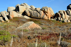 The rock line (Lavezzi archipelago, Corsica) (HervelineG) Tags: rocks rochers lavezzi island îles fleurs flowers d7000 corse corsica seashore borddemer bonifacio archipelago granite granit