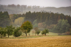 grief (Wöwwesch) Tags: lonely walk autumn rain colors field trees cold wet forest hills