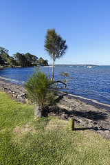 Lake Macquarie Shore (oz_lightning) Tags: australia manneringpark nsw newcastle sonyrx100iii boats lake landscape nature seascape water newsouthwales aus