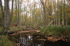 IMG_6312 (sjj62) Tags: fishcreekwi doorcountywi fall autumn woods doorcounty fishcreek 40d