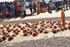 DSC_2537 (earthdog) Tags: 2018 needstags needstitle nikon d5600 nikond5600 18300mmf3563 fall autumn pumpkinpatch spinafarms farm