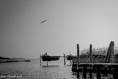 Venezia, isola del Lazzaretto vecchio (Gian Floridia) Tags: lazzarettovecchio venezia bn bw bienne erba lagoon laguna mare nets pontile pontoon reti sea steccato trees