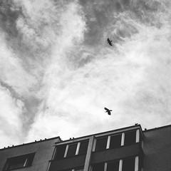 crows (shopiukas) Tags: monochrome fuji fujifilm fujix fujilietuva fujilithuania xtrans xt10 fujixtrans lietuva lithuania black blackandwhite blackwhite bnw sky clouds house crow crows birds nature city cityscape urban mir mir1b 37mm m42 filmsimulation jonassopaphoto