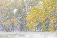 October 14, 2018 - Winter and fall clash. (Tony's Takes)